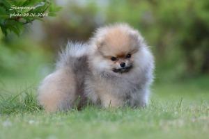 щенок в парке